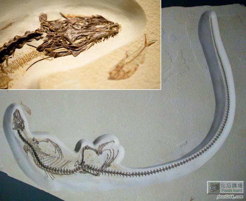 古生物學家發現生活在4900萬年前的四眼蜥蜴