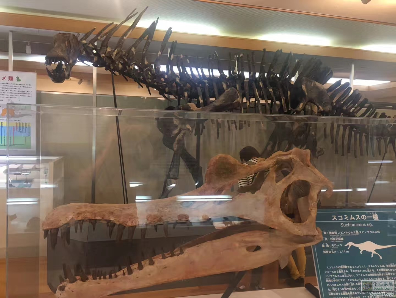 日本神流町恐龍博物館