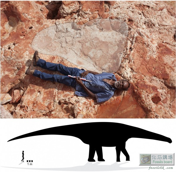 澳大利亞發現最大恐龍腳印化石長1.7米