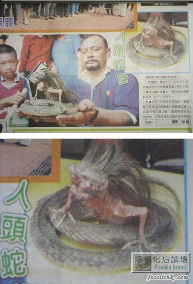 蛇妖美人图片人头蛇尾