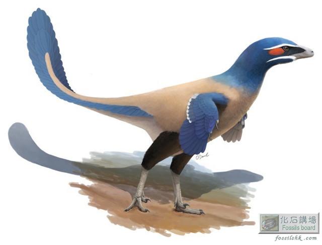 加拿大阿爾伯塔省發現白堊紀新種羽毛恐龍化石