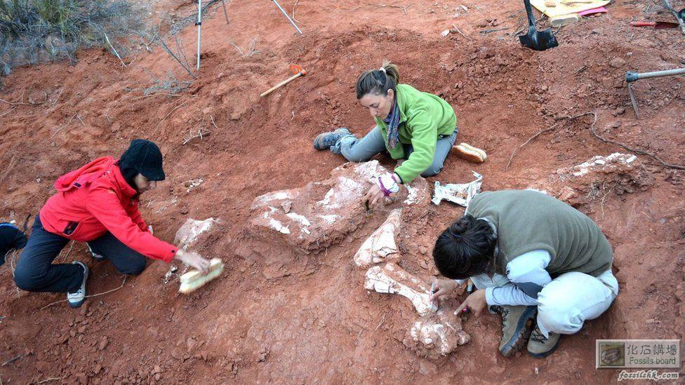 阿根廷於三疊紀時期發現最早的蜥腳類恐龍化石