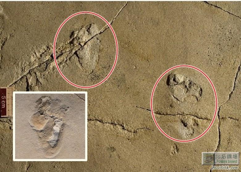 希臘570萬年前足迹化石或顛覆人類進化史
