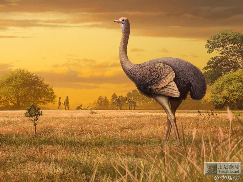 克里米亞發現200萬年前體重450公斤的巨鳥化石
