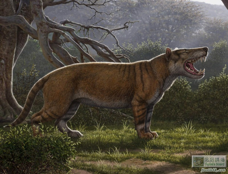 肯亞發現二千萬年前重1.5噸史前巨型肉食哺乳動物