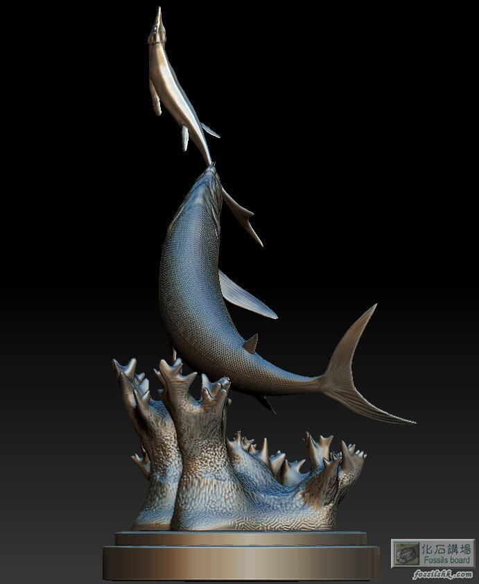 剑射鱼捕猎幼体沧龙