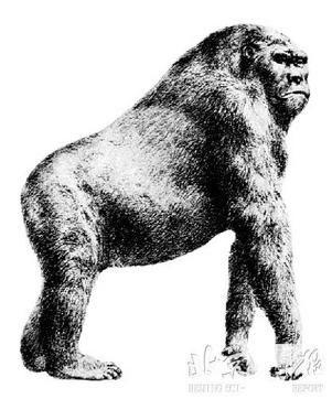 世界脑袋最大的动物
