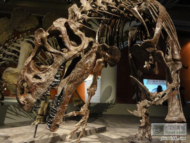 香港科學館《巨龍傳奇》恐龍化石展 (2013.11.8-2014.4.9) 《巨龍傳奇》恐龍化石展明日即將公開展出, 今天優先進場參觀了, 並拍了照片上來給大家先睹為快, 整個展覽製作非常認真, 大家有時間必須到場欣賞一下!!  恐龍於二億年前開始出現,繼而雄霸地球。在地球的漫長歲月中,盤古大陸因地殼板塊運動而分裂,形成具有不同氣候和環境的大陸,恐龍為了適應不同的環境,繁衍出形態各異的品種,並成為史上最強的動物一族。可惜由於氣候和環境的轉變,恐龍最終仍難逃滅絕的命運,在6,500萬年前完全絕跡於地球上。幸