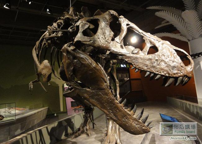 香港科学馆《巨龙传奇》恐龙化石展