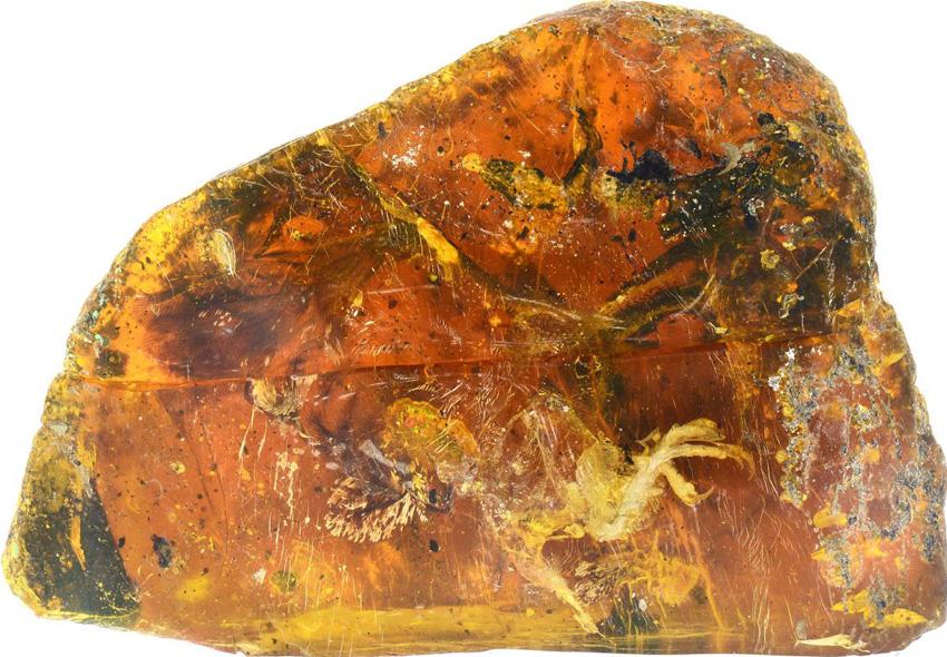 首次於9900萬年前白堊紀琥珀中發現到古雛鳥化石