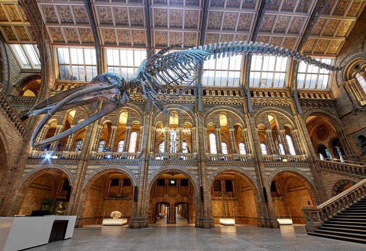 藍鯨正式成為英國自然歷史博物館新館主