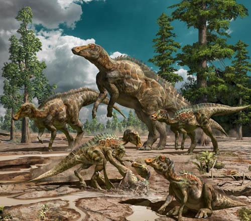 中國山東發現新種鴨嘴龍類恐龍化石