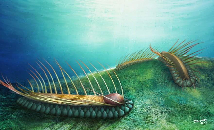 澄江動物群新種奇異生物 為擔輪動物帶來新啟示