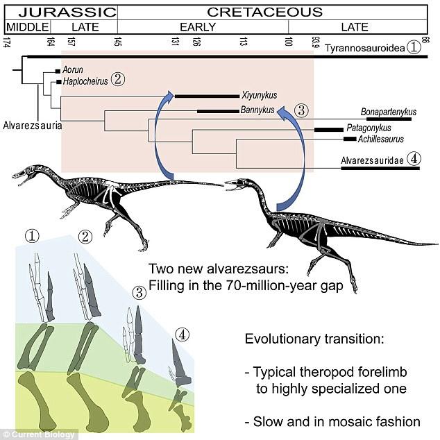 新阿爾瓦雷斯龍類化石揭示恐龍手指演化歷程
