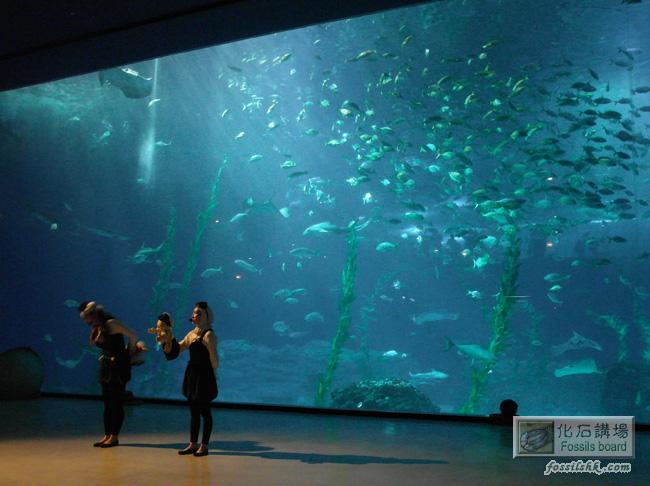 亞洲最大水族館-韓國濟州島水上星球 Aqua Planet