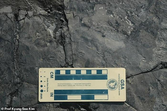 韓國發現世上最小的恐龍足印化石 身形小如麻雀