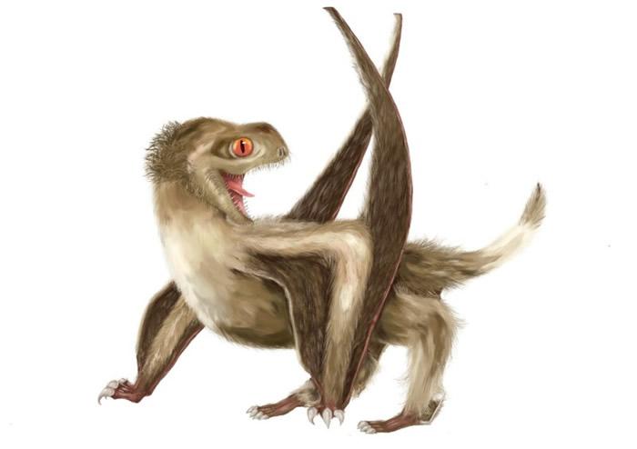 翼龍身上發現羽毛狀毛髮結構 羽毛起源提前七千萬年