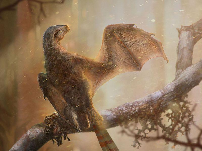侏羅紀擅攀鳥龍類揭示膜質翅膀在恐龍中的演化