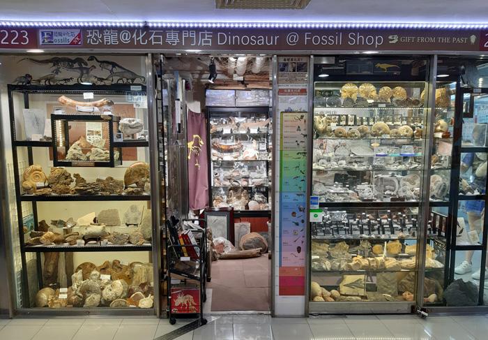 香港首個古生物化石主題商店開幕【恐龍@化石專門店】