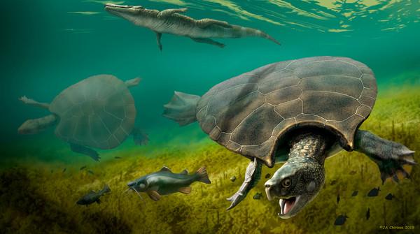委內瑞拉發現2.4米世上最大的龜化石